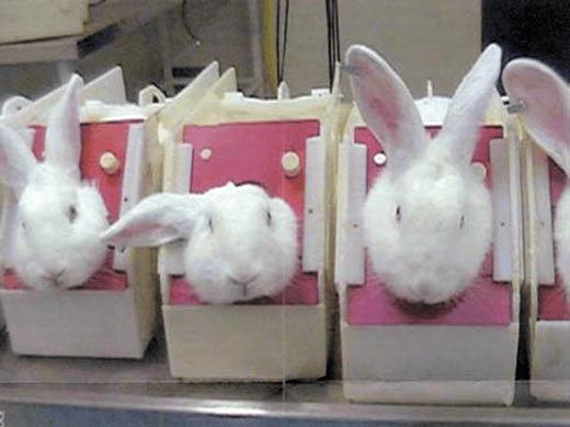Fabricar en China para vender allí se testa en animales