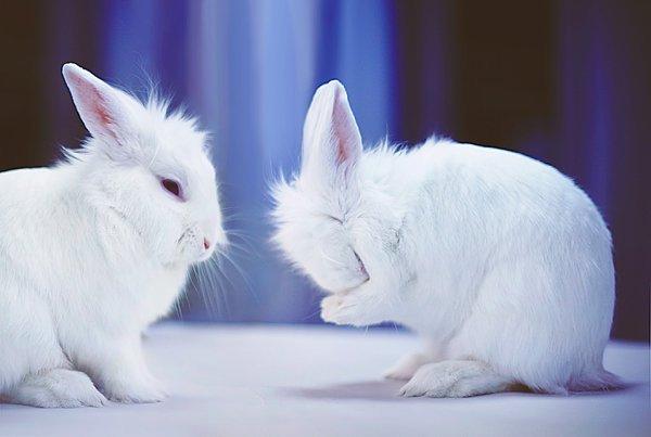 La experimentación animal en la industria cosmética