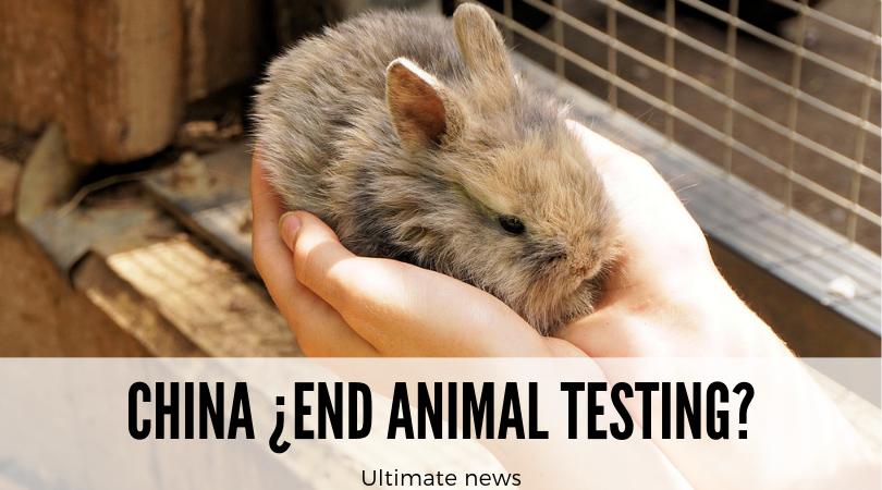 ¿Fin de las pruebas con animales en China? Todavía no