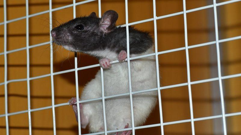 Millones de animales mueren en experimentos